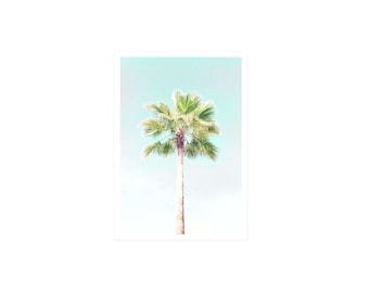 Postcard Palm Tree