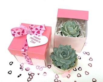 Birthday Gift Box-Succulent Gift for Her-Gift for Mom-Garden in a Box-Succulent Gift Box-Love-Succulent Favors-Succulent Box-Pink Favors