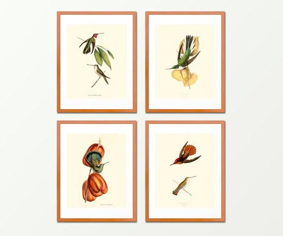 Hummingbirds - Set of 4 Prints - Antique Nature Print - Bathroom Wall Art - Natural History - Ocean - Beach  Art