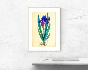 Blue Iris Print, Iris Poster, Iris Wall Art, Botanical Print, Blue Flower Poster, Iris Wall Decor, Iris Picture, Flower Wall Art, Watercolor