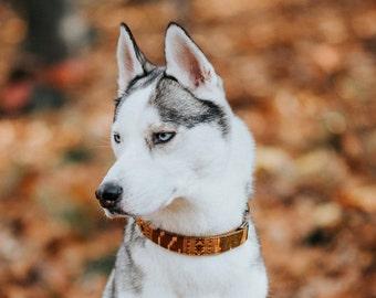BOHO woven Dog Collar - mustard, brown- Antique Brass
