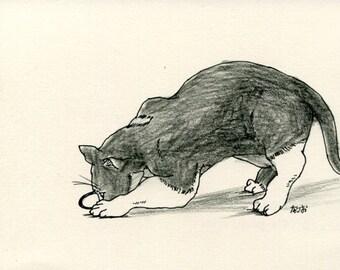 Cat original drawing - P010November2015