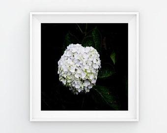 Hydrangea Flower Print, Fresh Flower Print