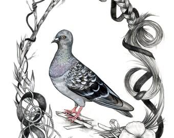 Pigeon Friend - archival digital print
