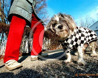 Shih Tzu Dog in Sweater Red Pants Photo Art