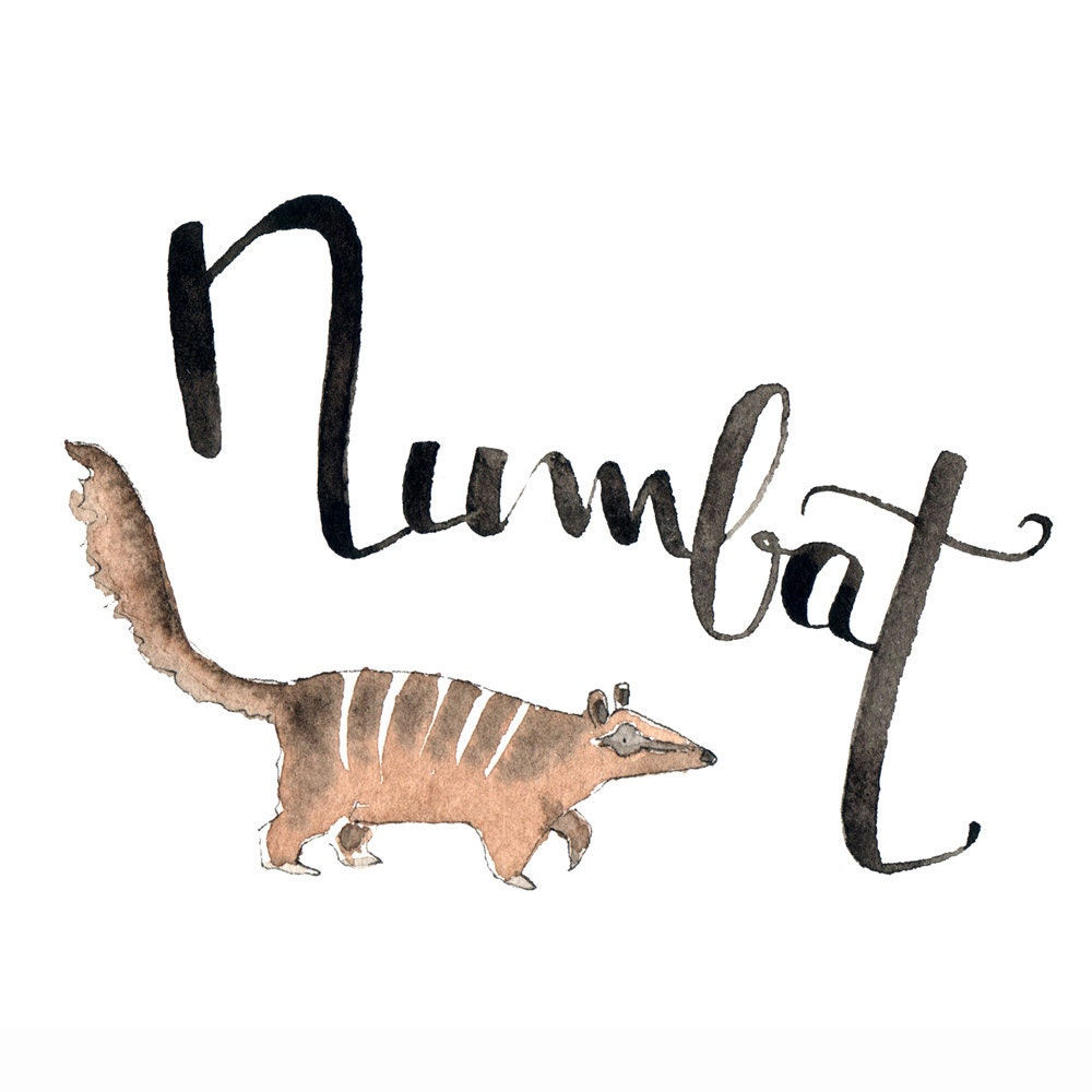 N like Numbat Learn english with fun What animal name