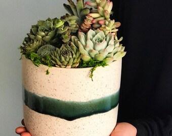 Classic Ceramic Succulent Arrangament