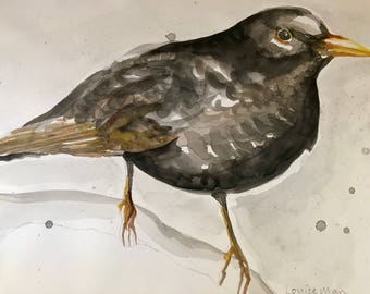 Original watercolour painting of a blackbird - Curious Blackbird, Winter Garden Bird, Blackbird Watercolour, Blackbird Print, BIrd painting
