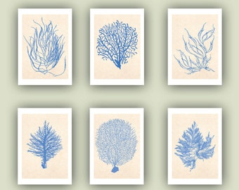 Sea fan Prints, Ocean seafan Print, Sealife Nautical Art, Blue Sea fan art, beach cottage decor, coral art, Set 6 seafan Print