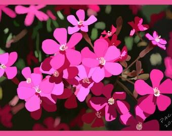 Flower Greeting Card, Blank, Rock Soapwort Design No A6045