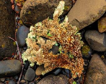 Beautiful Lichen on Riverbed Rock, Interior Design Downloads