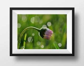 gentle daisy covered by little dew drops in the morning light, bokeh, spring morning, green fresh grass, home decor, wall decor