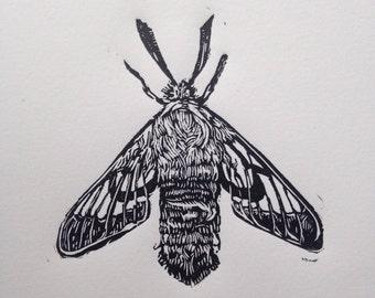 Moth Linocut