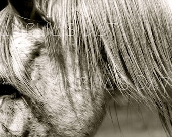 Downloadable Horse Photo / Downloadable Horse Print/ Horse Photograph/ Horse Art/ Horse Lover Gift/ Equine / Horse Print/ Equestrian Decor /