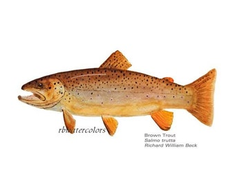 Brown Trout fish watercolor print 5x7 fish fly fisherman fathers day grandfather gift  den office white rbwatercolors on etsy