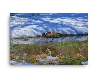 24x36 LowBeeTees Glossy Ibis Canvas