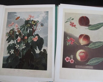 Vintage Book of Flower Prints