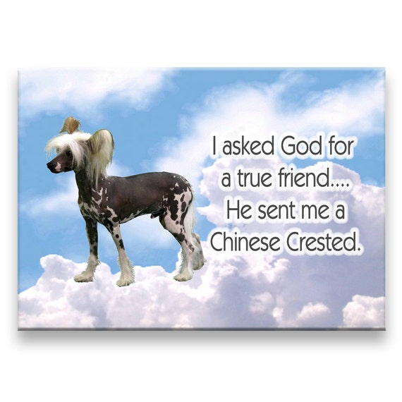 Chinese Crested True Friend Fridge Magnet