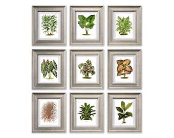 Begonia Print - Wall Art Print - Botanical Poster - Flowers Print - Botanical Collection - Flowers Gallery - Botanical Illustrations