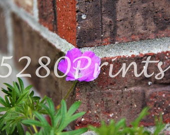 brick-flower-purple-vibrant-color-home-decor-stem-green-5280-prints-digital-download-photography-photo-wall