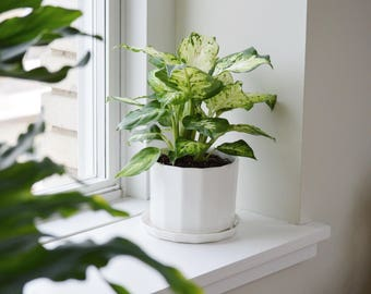 Straight Riveted Planter - Small
