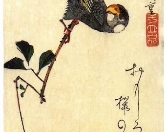 Japanese Art. Fine Art Reproduction. Hiroshige - Birds:  Java Sparrow and Magnolia c.1830s