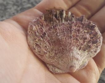 natural pink sea shell from aegean sea