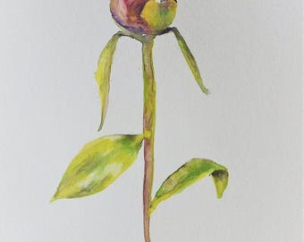 Peony.  Before the Blossom. Watercolor Painting