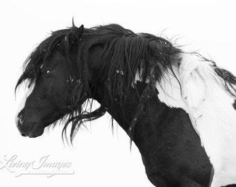 Black and White - Fine Art Wild Horse Photograph - Wild Horse - Washakie - Black and White - Fine Art Print