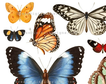 Butterflies Digital Collage Sheet, Butterfly, Vintage Illustrations, Instant Download, Printable Images