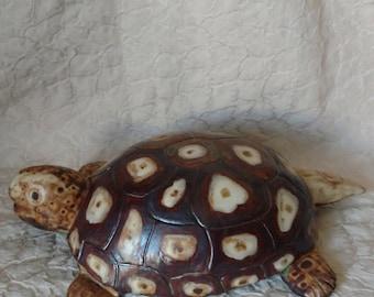 Turtle, Tortoise,