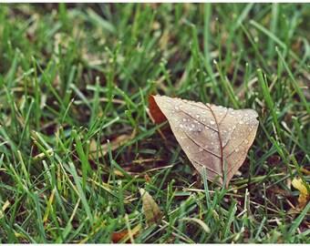 Raindrops Fallen Leaf Photo Art - 5x7 Nature Photograph - Rainy Autumn Leaf Photo - Green Grass Brown Leaf Photo - Liberty Images Art