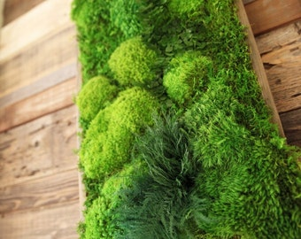 "40"" x 18"" Artisan Moss® High Profile Plant Painting® No Maintenance Green Wall Art. Real Preserved Moss & Ferns in Reclaimed Wood Frame."