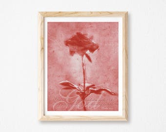 """Rose Collage Photography, Christian Wall Art Decor, Inspirational Rose Art, Floral Art Print, God Inspired Print, Red Rose Print, 8"""" x 10""""."""