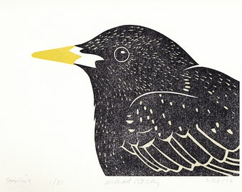 Starling print, head and shoulder portrait of a really handsome bird
