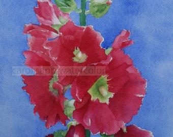 hollyhocks watercolor-hollyhocks painting-flower painting-flower art-red hollyhocks-archival print-botanical art-botanical watercolor