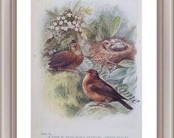 Antique Book Print, Antique Bird Print, Blackbird Nestling, Bird Print, Wall Art, House Warming Gift, Original Lithograph, Unframed Print