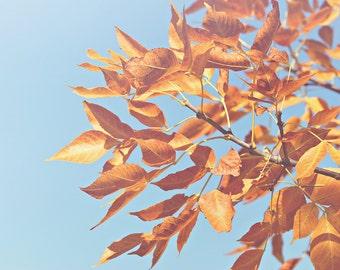Golden Leaves Color Photo Print { yellow, blue, sky, tree, branch, sunshine, sunlight, wall art, macro, nature & fine art photography }