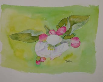 Original watercolor painting apple blossom