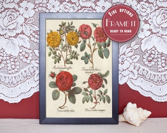 "Vintage illustration of Roses - framed fine art print, flower art, 8""x10"" ; 11""x14"", FREE SHIPPING - 94"