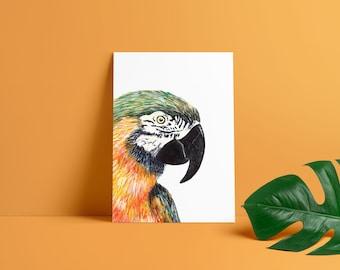 Parrot Postcard - Macaw - Birthday Card A6 - Tropical Post Card - Watercolour Illustration - Giclée Print - Art print - Exotic Bird