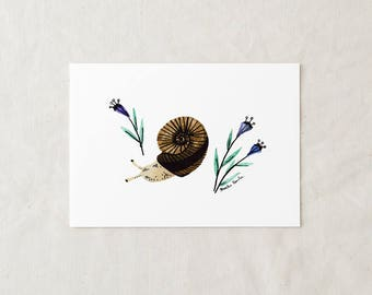 Escargot - impression d'Art