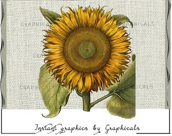 Sunflower printable graphic instant Digital download image for scrapbook decoupage iron on fabric transfer to burlap tote pillows 2154
