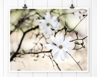 Flower photography, Wall Decor, White Magnolia Photo, Magnolia Print, spring blossom photo, nature print, wall art print, bedroom wall decor