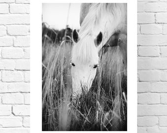 Horse Photography,Black & White Horse Photography,White Horse Photography,Horse Decor, xmas gift for sister,Photography,Horse Print