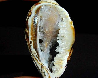 101.00 cts aaa 100% Natural earth mine VINTAGE look FOSSILLIZED SHELL druzy loose gemstone