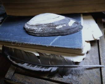 "Still Life Photography ""As Below, So Above"" Moody Charcoal & White Shell and Feather Amid Books. Library Art chiaroscuro Photo Giclee Print"