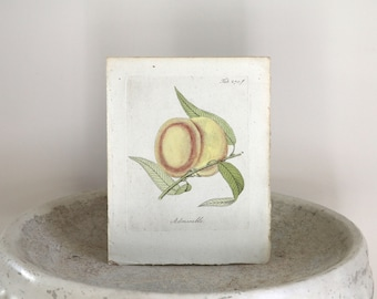 18th Century Hand Colored Botanical Engraving c. 1798 Friedrich Bertuch 7 3/4 x 9 3/4 inches