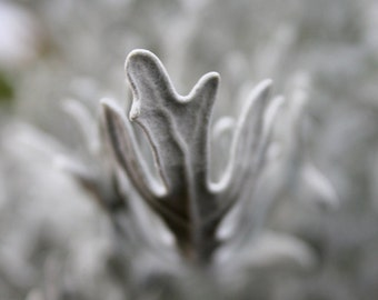 Nature Photograph / Nature Photography - Cape Cod Print - Macro Photography Wall Art - Macro / Framed / Canvas