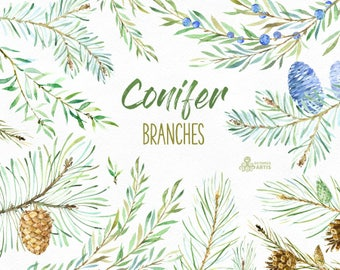 Conifer Branches. Watercolor floral clipart, Christmas, pines, cones, forest, spruce, fir, woodland, wild, coniferous, invitation, botanical